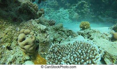 Underwater tropical sea.