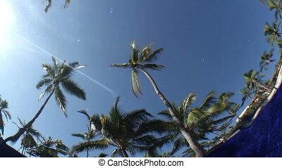 underwater, ungewöhnlich, teich, bäume., himmelsgewölbe,...