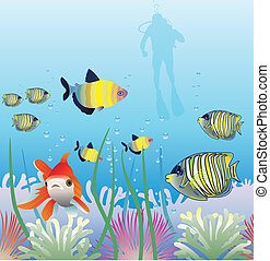 tropical fishes and scuba diver