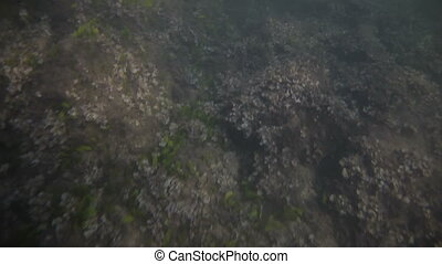 Underwater video shooting on the beach of Mallorca. - Video...