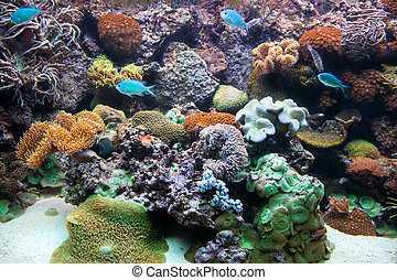 Underwater view, fish, coral reef