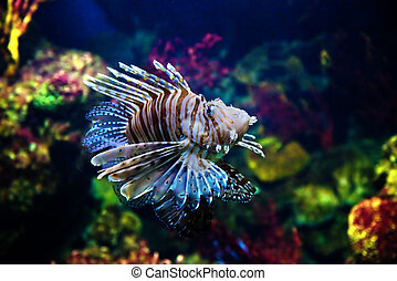 Underwater view, fish, coral reef - Underwater view in ...