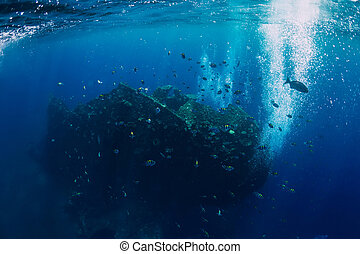 Underwater view in tropical ocean with fish at shipwreck