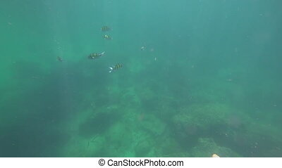 Underwater view of fish. Snorkeling in Andaman Sea -...