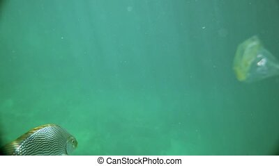 Underwater view of fish with floating plastic bag around...