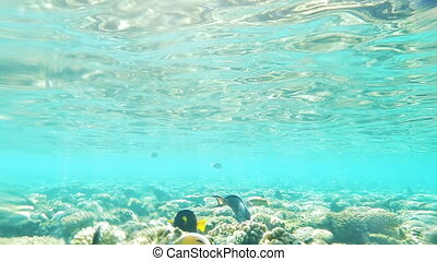 Underwater View Of Sea With Coral Reef, Fishes And Sun Rays