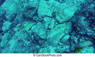 Underwater. View of stones on seabed, close-up