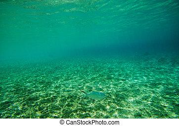 Underwater View of YOSHINO Coast, Okinawa Prefecture/Japan, ...