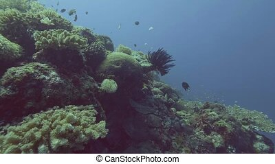 Underwater view seaweed on coral reef and fish swimming in...