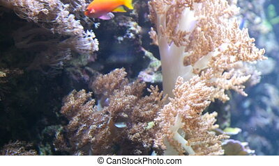 underwater, welt