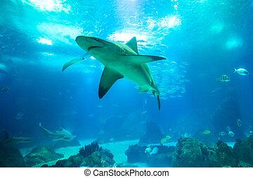 Underwater white shark