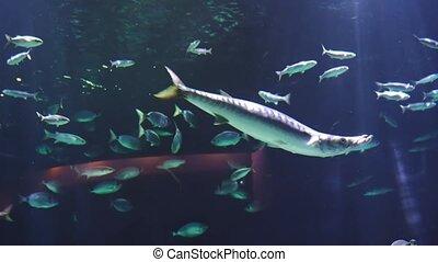 Underwater wildlife background. ecology ocean concept. Aquarium in oceanarium . High quality 4k footage