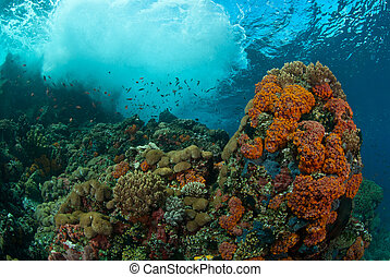 Underwater wonder - Waves crashing onto a coral reef, Raja...