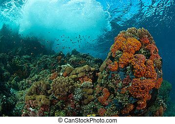 Underwater wonder - Waves crashing onto a coral reef, Raja...