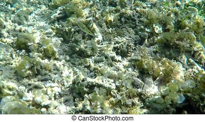 Underwater word with coral reef colony