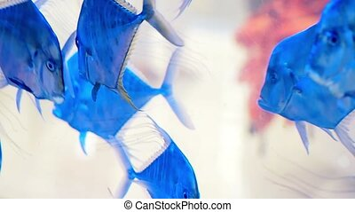 Underwater world. Beautiful aquarium with blue water and...