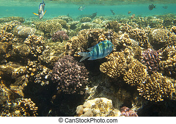 Underwater world. Coral fishes