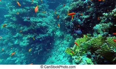 underwater world corals and tropical fish