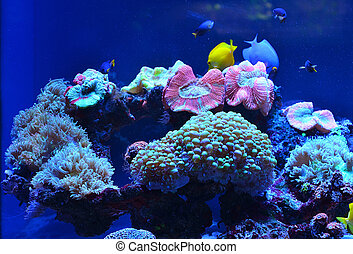 Underwater world: corals, fish, stones covered with moss, algae