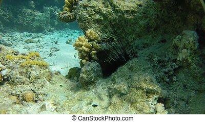 Underwater world exotic sea