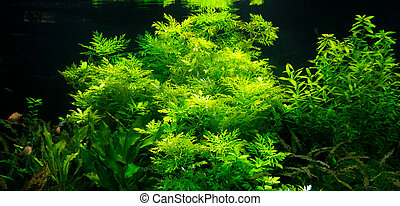 Underwater world - Green seaweed plants with fishes in an...
