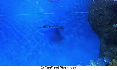 Underwater world in oceanarium