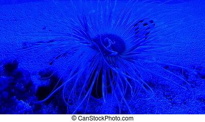 Underwater world in aquarium of oceanarium