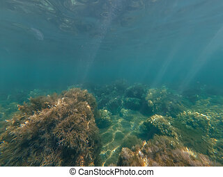 underwater world in sea with clear blue transparent water