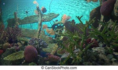 underwater world in the aquarium. marine life in salt water. fish swim between corals.