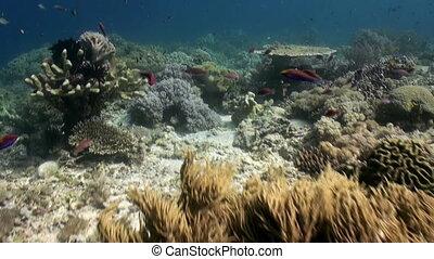 Underwater world Marine life of Bali Indonesia.