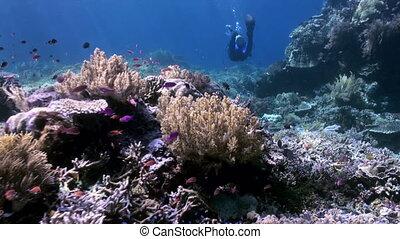 Underwater world of Bali Indonesia. Marine Life.