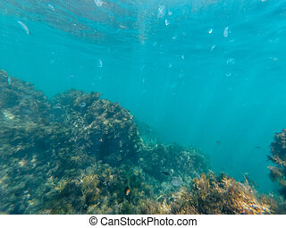 underwater world of clear blue water in depths of sea with jellyfish and fish