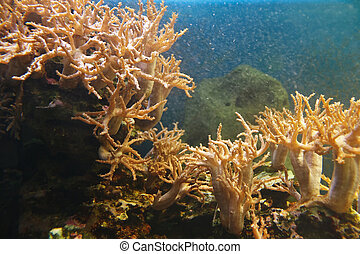 Underwater world of coral reef in tropical sea.