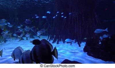 underwater world - sea, ocean, fish, coral