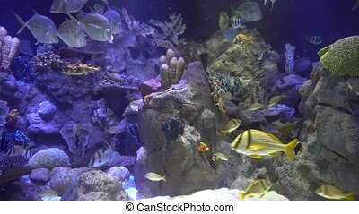 underwater world - sea, ocean, fish, coral - underwater...