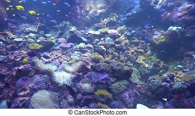 underwater world - sea, ocean, fish, coral - underwater...