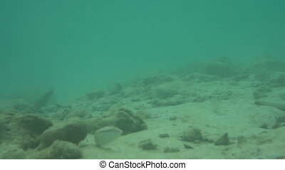 Sea scenery underwater in Thailand