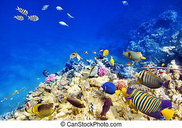 Underwater world with corals and tropical fish. - Wonderful ...