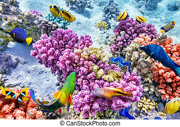 Underwater world with corals and tropical fish. - Wonderful...