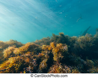underwater world with seaweed and the clear blue water