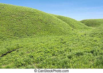 Undulating hills - Bright green undulating hills under blue...