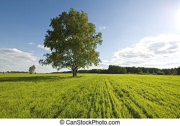 une, champ, arbre vert