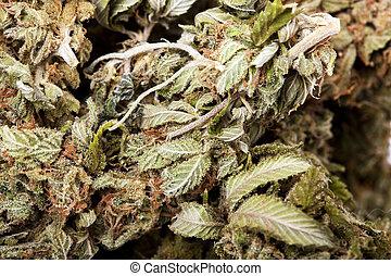 une, extrême, macrom, coup, de, a, cannabis, bourgeon, cela,...
