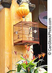 une, lanterne, hoi, oiseau chanteur, vietnam, soie, cage