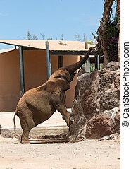 une, parc, safari, éléphant