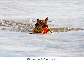 Dog ran after a toy and fell under the ice