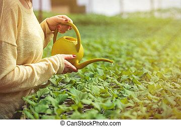 ung, bonde, kvinna, vattning, grön, plantor, in, växthus