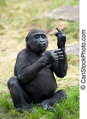 ung, gorilla, fastsittande, dens, mitt fingra