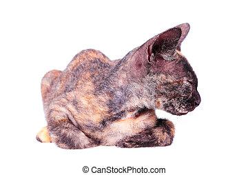 unga skallig pussie svarta leggings Porr