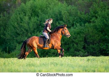 ung kvinna, är, ridande, a, häst, in, sommartid